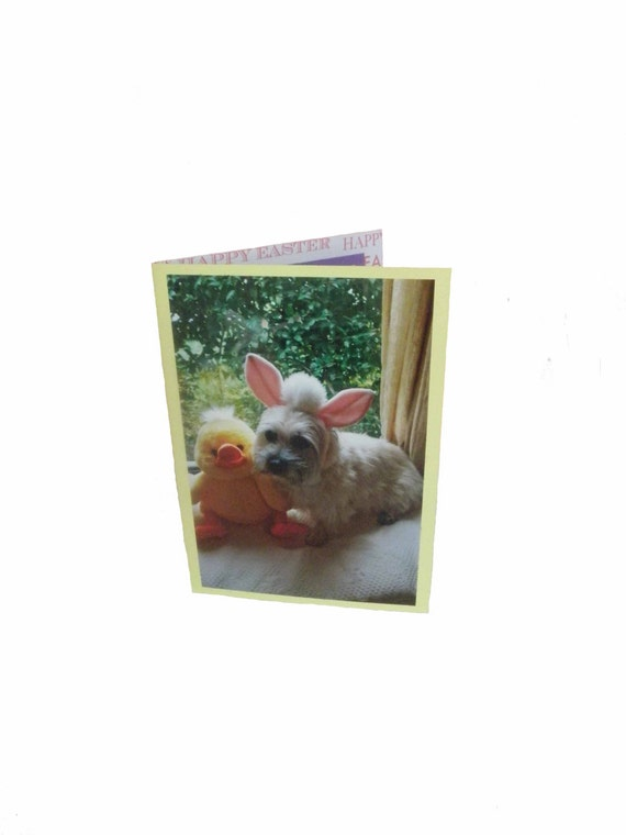 Cairn Terrier Easter Card, Bunny Easter Card