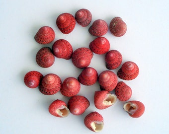 Strawberry Turbos Shells Mix of 10