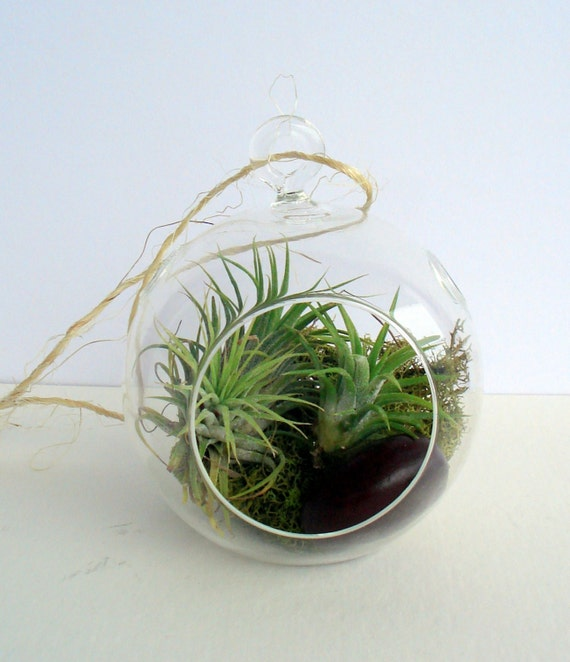 Lucky Globe Air Plant Hanging Terrarium Clear Glass Orb Kit