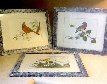 Vintage Framed Bird Botanical Prints  Matted Painted Frames Cardinal Goldfinch Bluebird