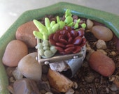 Succulent Ring - Living Wall