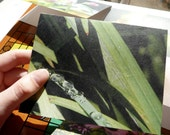 Photo Note Cards, Recycled, Blank, Summer, of Vancouver Island: Support Lyme Disease Foundation
