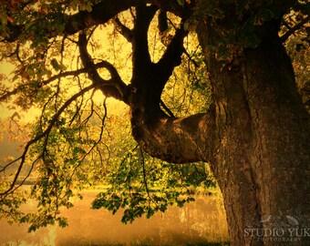 Nature Photography Tree - Fine Art Photograph 8x10 Dreamy Romantic Fall Autumn Surreal Sunny - Avalon