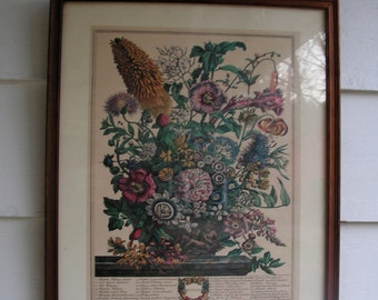 Classic Vintage Reproduction of Henry Fletchers' Engraving AUGUST Botanical 1730