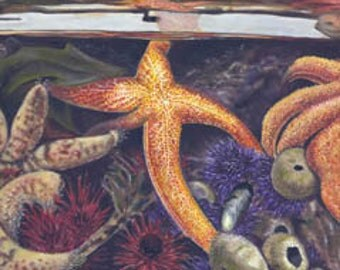 Tidepool starfish ocean painting 8x10 print from original oil painting seaside oceanlife painting home decor earthspalette