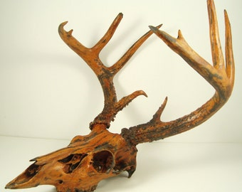 Deer Skull Taxidermy Painted Antlers - Black Iron, Rust Natural Patina Art Sculpture