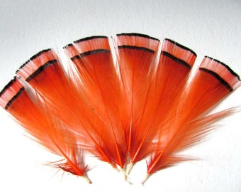 6 Golden Pheasant Tippet Feathers - Dyed Hot Orange