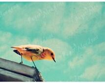 Little Bird Photography Download, Blue Aqua Orange, Instant Photo Download, Nursery Art, Fairy tale, Girls Room, Clouds Dreamy, Cottage Chic