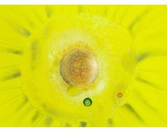 P68 - Yellow Sun Flowers Sunflowers Abstract Art Postcard