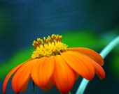 Beautiful Orange Flower - Flower Photography
