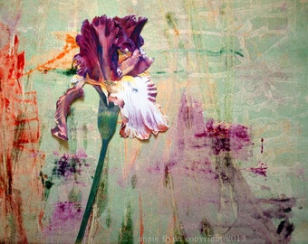 "Archival Print of original Mixed Media ""Purple Iris on Turquoise Horizontal"""