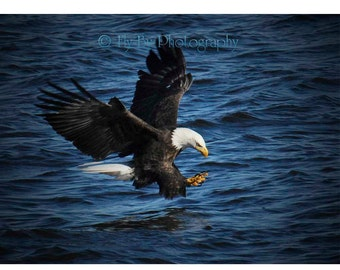 Bald Eagle Fishing Fine Art Digital Photography for Home or Office Decor