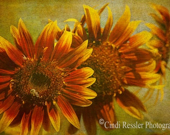 Sunflower Trio, Photography,  Floral Photography