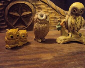 Injured owls