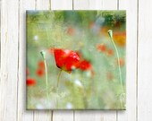 Red Poppies on canvas - floral art on canvas - wedding gift list