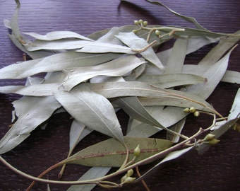 Eucalyptus leaves - 1 oz (30gr)