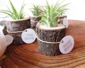 Airplant Holder - Perfect as a Stocking Stuffer, Party Favor or for Your Office