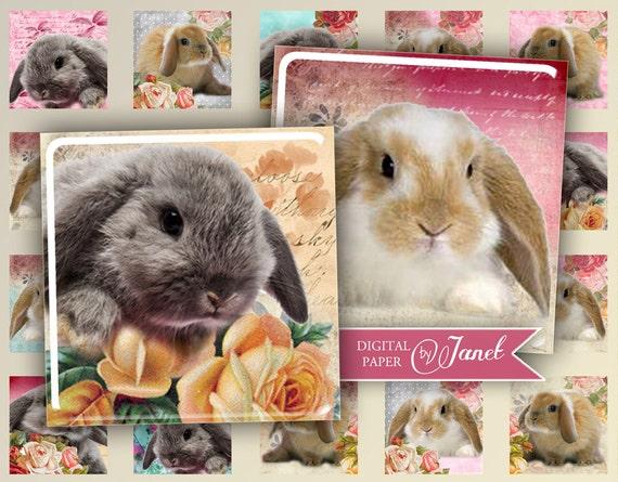 Little Rabbit - squares image - digital collage sheet - 1 x 1 inch - Printable Download