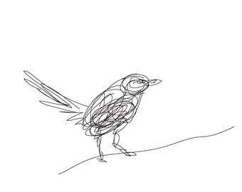 Bird Illustrated Line - Digital Drawing