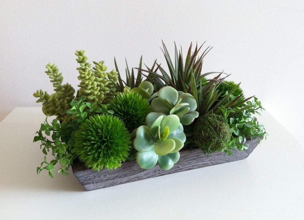 Modern succulent arrangement for Garden arrangement