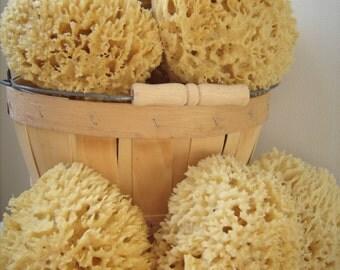 """Sea Wool Sponge 6""""-7"""" Cut"""