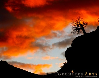 Zion National Park, Utah Photography, Sunset Tree Silhouette Landscape, Desert Photo, Orange Black Art, Southwest Art Print 8x10