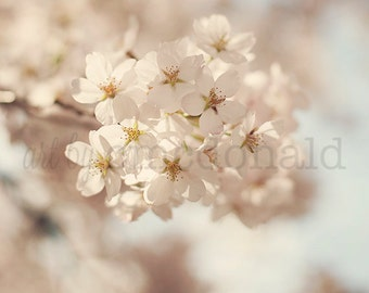 Soft & Dreamy - Photographic print - Cherry Blossom, Spring, Washington, D.C., White, Whimsical, Wall, Art, Dreamy, Decor, Nursery, Baby