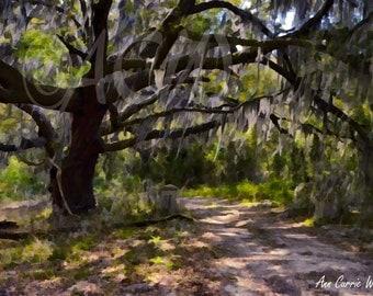 An ancient moss draped oak tree on  Edisto Island, South Carolina (canvas)