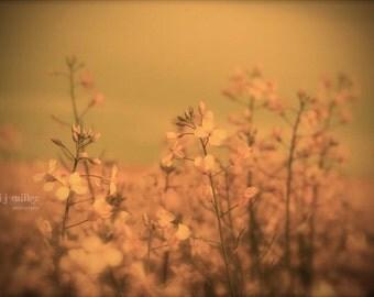 Fine art photograph - yellow hues - canola field - floral photography - farm life - large wall art - home decor - office decor - rustic art