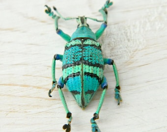 DIY Crafts, Real Dried Aqua Blue Weevil Specimen, Bug, Insect, Create, Craft Supply, DIY , Science, , Nature, Outdoors