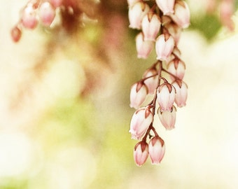 Vintage Petals, 8x8 Fine Art Photograph, Nature, Flower, Pink Green Yellow, Wall Art, Shabby Chic, Bokuh, Soft focus