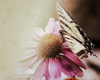 Photo Print -  Vintage Textured Butterfly and Pink Coneflower