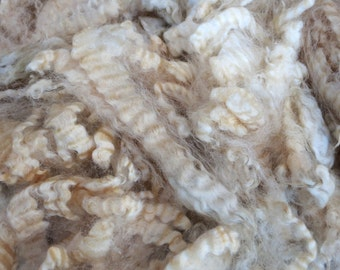 Border Leicester raw wool fleece unwashed - 3kg