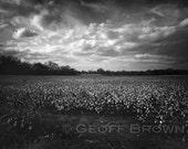 Cotton Field, 8x12 original signed fine art photographic print