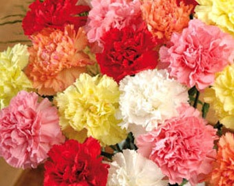 Carnation seeds, 39,garifalo, carnation flower, gardening, flower seeds, lucky luke flower,γαρυφαλλο