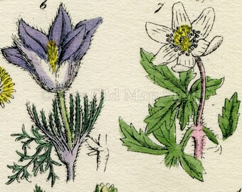 Antique Botanical Print of Wild Flowers, 1914 John Sowerby Hand-Coloured Flower Plate (1 to 20)
