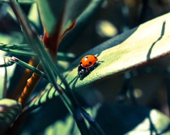Ladybird on a Leaf Photograph, Print Wall Art. Green and Red, Nursery Decor, Square Format Print, Nature Photography, Fine Art Photography