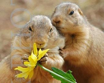Prairie Dogs with Flower, Fine Art Photograph