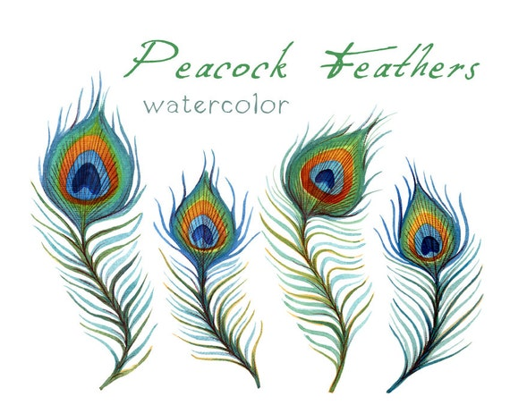 Items similar to Feather Clip Art, Digital Feather ...