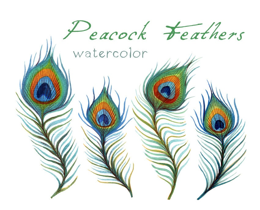 Amazoncom Zucker Feather TM  Peacock Feather Eyes