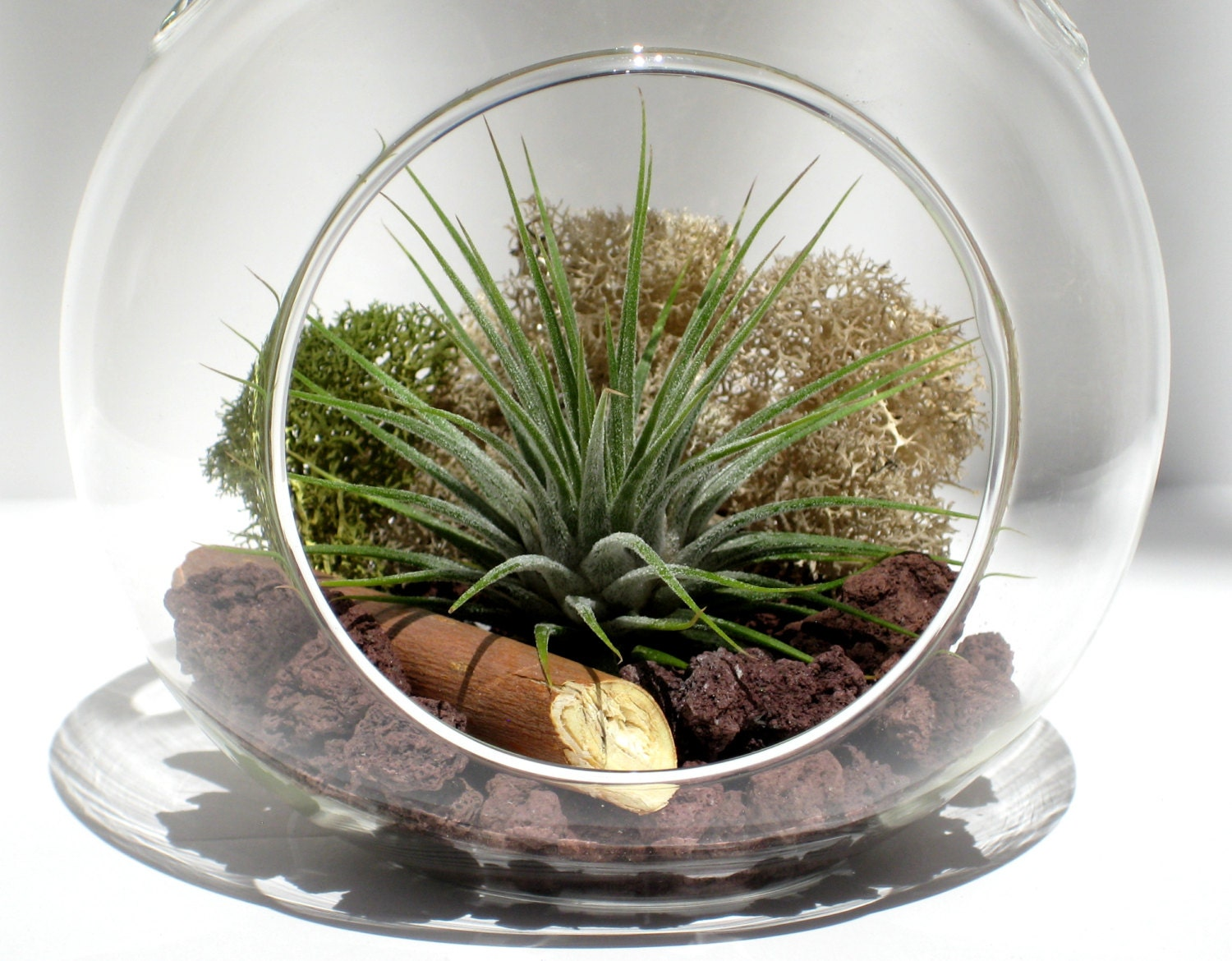 Air Plant Terrarium Kit VOLCANO Tillandsia with Red Lava  Etsy