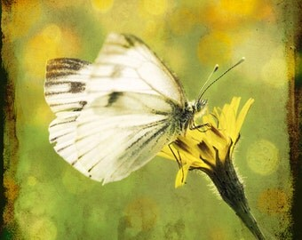 Nature photography, Butterfly, White, Yellow flower, Sunny, Meadow, Wall Art.