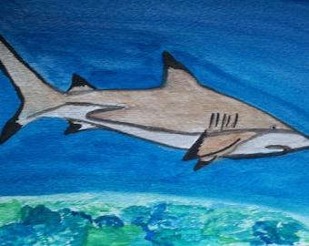 Blacktip reef shark hand painted card