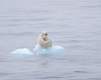 Fine Art Print, Polar Bear, Arctic, Svalbard, Wildlife photograph, Global Warming, Climate Change
