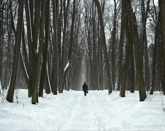 Landscape Photography. Man walking down path through forest. Tall trees. Moscow, Russia.