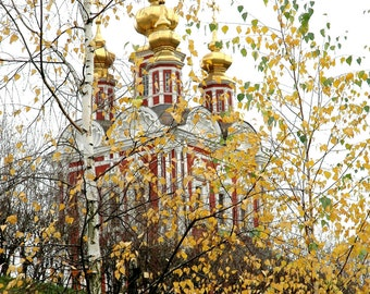 Golden domes of Novodevitchy Convent. Red Church. Convent and Cemetery. Birch tree. Moscow, Russia.