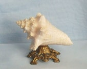 Antique Victorian Conch Shell Pin Cushion on Base