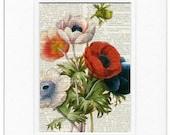 vintage anemone print