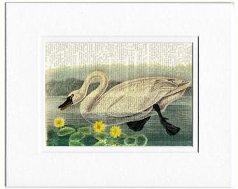 Audubon 1800's Swan print