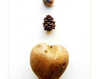 Kitchen Decor Fine Art Photography Heart like a Potato